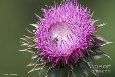 Thistle And The Bee Art Print by Tannis  Baldwin