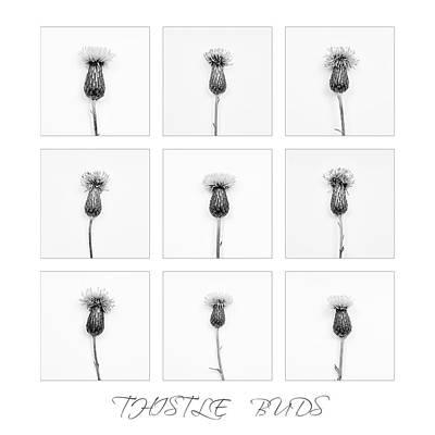 Beauty Photograph - Thistle Buds 2 by Jochen Schoenfeld