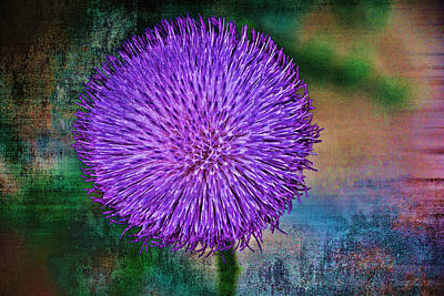 Photograph - Thistle by Charles Muhle