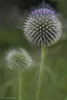 Photograph - Thistle by Fran Gallogly