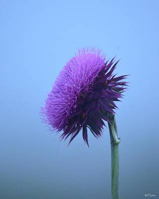 Photograph - Thistle In The Fog by Maria Urso