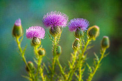 Thistle In The Sun Art Print