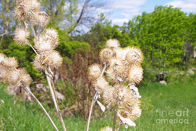Photograph - Thistle Me This by Mary Mikawoz