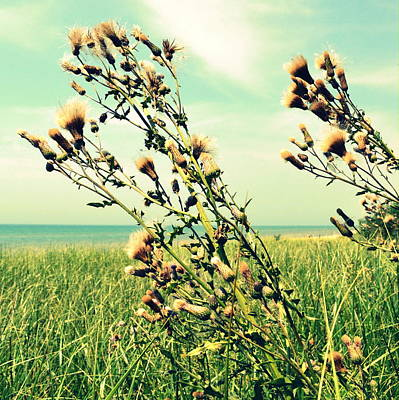 Thistle On The Beach  Art Print by Michelle Calkins
