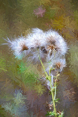 Photograph - Thistle Seeds Digital Artwork by Sharon Talson