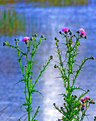 Photograph - Thistle by T Guy Spencer