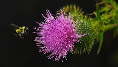 Thistle While You Work Art Print