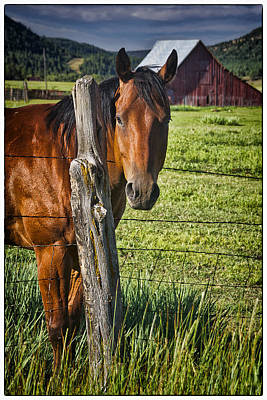 Animals Royalty-Free and Rights-Managed Images - Thompson Park Ranch Horse by Priscilla Burgers