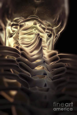Photograph - Thoracic Spine by Science Picture Co