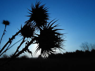 Photograph - Thorn Beautiful Photography by Georgi Dimitrov