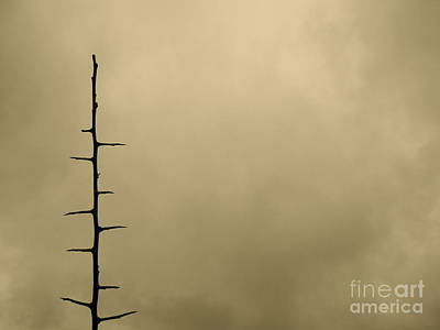 Photograph - Thorn Pagoda by Tim Good