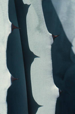 Photograph - Thorn Shadows by Ben Kotyuk