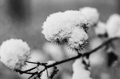 Photograph - Thorns Of Snow by Miguel Winterpacht