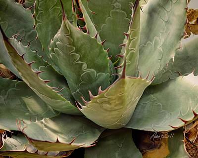 Photograph - Thorns - Textured Photo Art  by Ann Powell