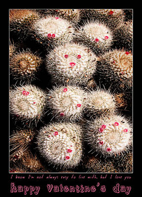 Photograph - Thorny Valentine by Weston Westmoreland