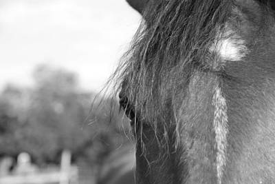Farm Scenes Photograph - Thoroughbred B/w by Jennifer Ancker