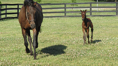 Photograph - Thoroughbred Foal by Holly Mathis