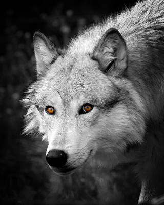 Photograph - Those Eyes by Steve McKinzie