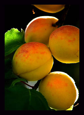 Those Glowing Golden Apricots Art Print by Susanne Still