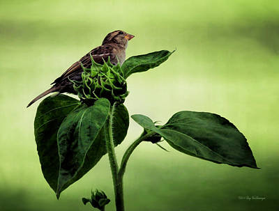 Photograph - Thoughtful Sparrow by Lucy VanSwearingen