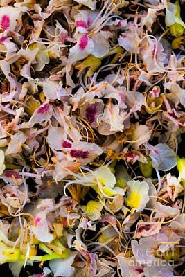 Photograph - Thousand Petals Of A Dream by Edgar Laureano