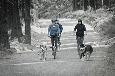 Photograph - Three Amigos 2 by Sherri Meyer