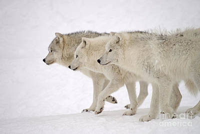 Photograph - Three Amigos by Joshua McCullough