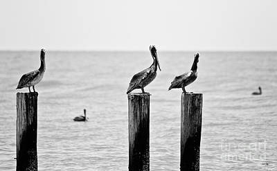 Of Artist Photograph - Three Amigos by Scott Pellegrin