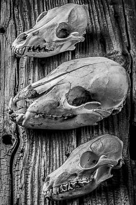 Photograph - Three Animal Skulls # 2 by Garry Gay