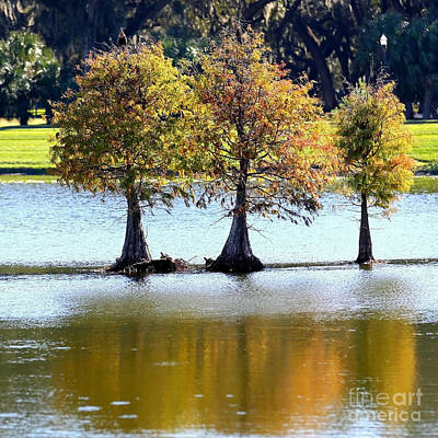 Pond Turtle Photograph - Three Autumn Cypress Trees by Carol Groenen