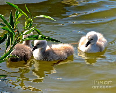 Photograph - Three Babies by Carol  Bradley