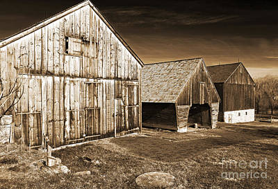 Three Barns Art Print by John Rizzuto
