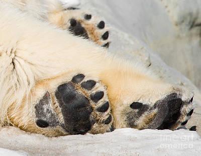Bear Photograph - Three Bear Paws by Les Palenik