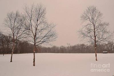 Three Birch Trees In Winter Art Print