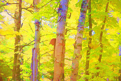 Lovely Lavender - Three Birches in Wow Color by Susan Buscho