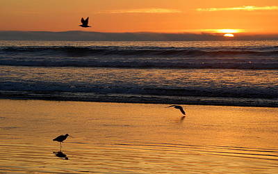 Photograph - Three Birds At Sunset by AJ  Schibig