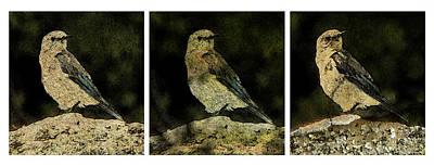 Three Birds Print by John Goyer