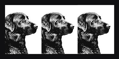 Photograph - Three Black Labs In A Row by Jennie Marie Schell