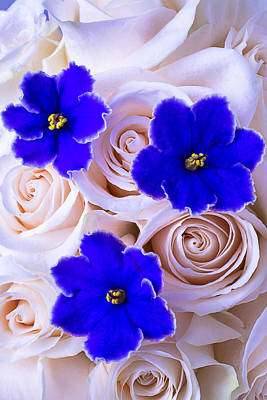 Three Blue Violets Art Print by Garry Gay