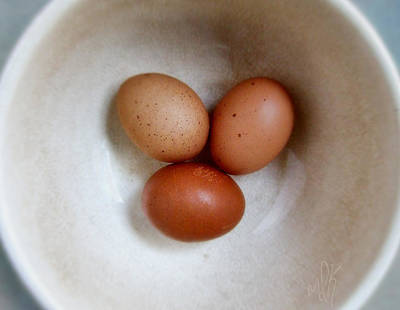 Photograph - Three Brown Eggs by Louise Kumpf
