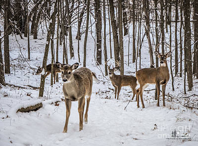 Photograph - Three Buck And A Doe by Ronald Grogan