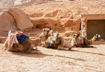 Dromedary Digital Art - Three Camels Resting by Roy Pedersen