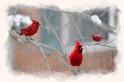 Art Print featuring the photograph Three Cardinals In A Tree by Dan Friend