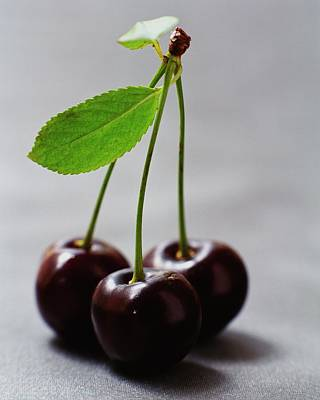 Raw Photograph - Three Cherries On A Stem by Romulo Yanes