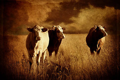 Cow Mixed Media - Three Cows by Heike Hultsch
