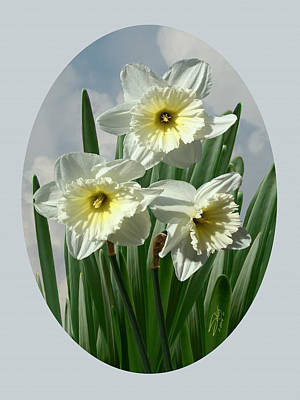 Digital Art - Three Daffodil Blossoms by IM Spadecaller