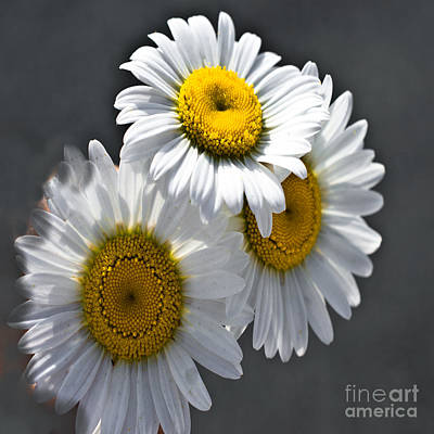 Photograph - Three Daisies - Duvet Cover Sized by Scott Hervieux