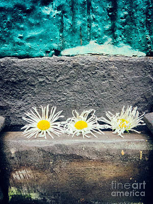 Print featuring the photograph Three Daisies Stuck In A Door by Silvia Ganora