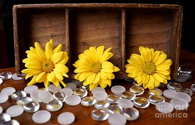 Photograph - Three Daisy Shadowbox by Kerri Mortenson