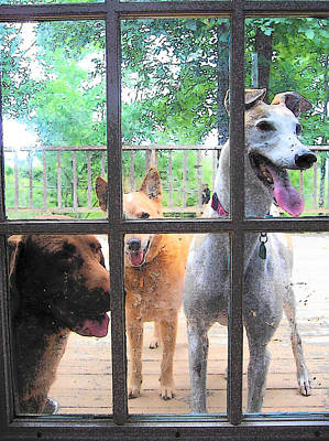 Photograph - Three Dogs At The Door by Strangefire Art       Scylla Liscombe